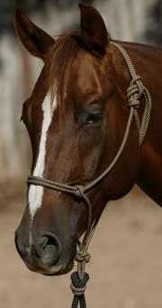 Craig Cameron Horse Handling Rope Halter