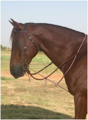 Rope German Martingale with Complete Rigging: Headstall, Bit & Reins